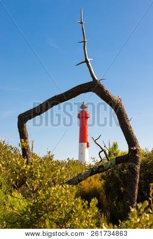 La Coubre Lighthouse framed in a natural pine tree trunk, Charente Maritime, France
