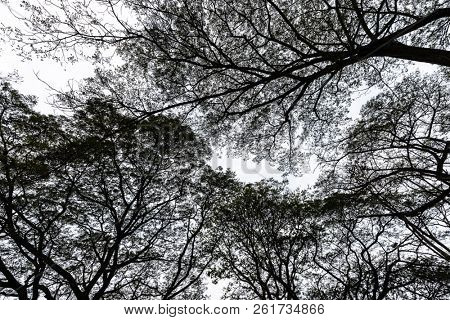Abstract tropical Albizia tree landscape in black and white