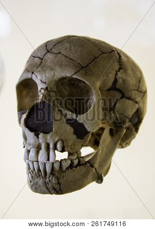 Human Prehistoric Skull, Detail Of Archeology, History Of Mankind