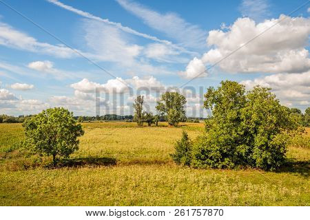 Solitary Trees In A Dehydrated Nature Reserve On A Sunny Day In The Dutch Summer Season. Most Of The