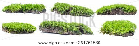 Green Moss Isolated On White Background Close Up.
