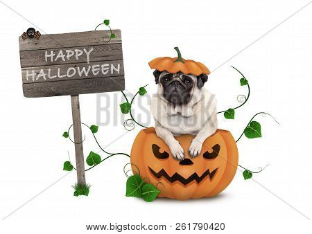 Cute Pug Puppy Dog Sitting In Carved Pumpkin With Scary Face, Wearing Lid As Hat, With Wooden Sign S