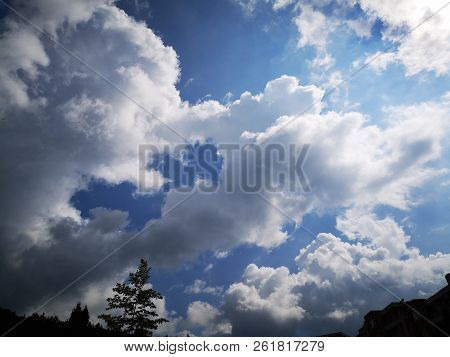 Beauty In Nature Blue Cloud Sky Day Growth Height Idyllic Low Angle View Outdoors Plant Scenics Sunl