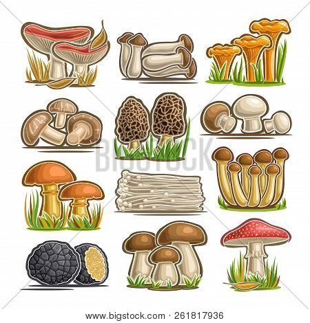 Vector set of eatable Mushrooms, 12 cut out assorted abstract raw fungus for healthy nutrition, collection of isolated various cartoon mushrooms for design label on packaging of frozen food on white. poster