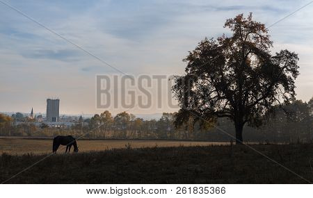 Silhouette Of A Horse Grazing And A Tree With Autumn Leaves, In Contrast With The Industrial Town In