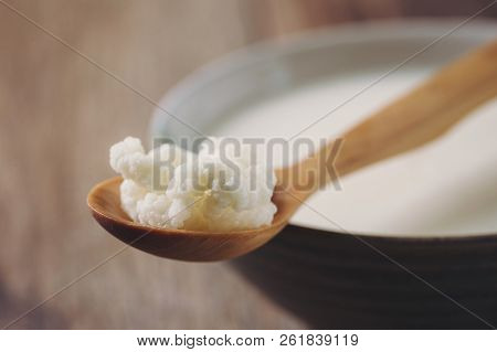 Kefir Grains on Wooden Spoon with a Cup of Kefir in background. Homemade Organic Probiotic. Shallow