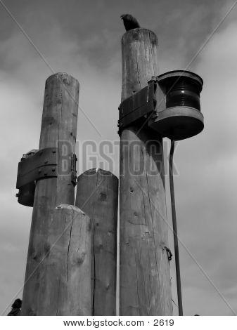 B/W Bird Post Pier 2