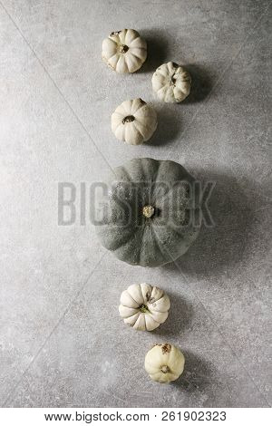 Grey Confection and white whole uncooked defected decorative pumpkins over grey texture surface. Flat lay, space. Autumn background. poster