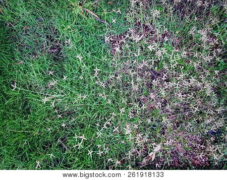 High Angle View Of Green Grass And Crowfoot Plants