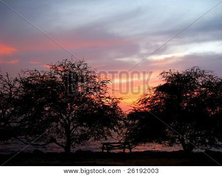 tree silhouette against vivid tropical sunset