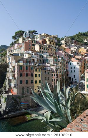Colorful buildings and plant  in Riomaggiore town; Cinque Terre, Italy