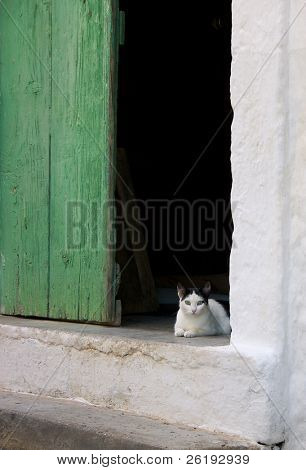 A bright-eyed kitten in the doorway of a traditional Greek village house. poster