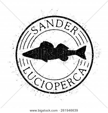 Zander Fish Vector. Stamp Fish. Vector And Illustrations.