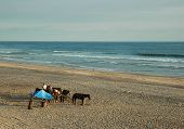 Tourists preparing to ride horses on the beach poster