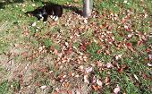 grass covered in autumn leaves with a cat poster