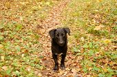 sad homeless dog in autumn forest poster