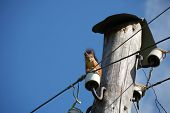 squirrel sitting on dielectric of old electric pole poster