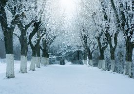 Winter Nature, Magic Snowy Forest A Landscape