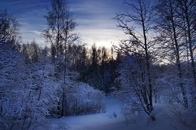 Winter Nature, The Snowy Forest Evening Landscape