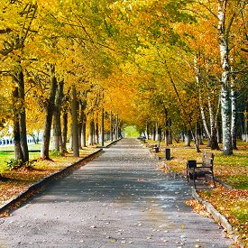 Autumnal Nature, Scenery In A Central Park