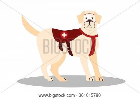 Dogs Rescuer, Labrador. Cadaver Dog For Finding People. Cute Domestic