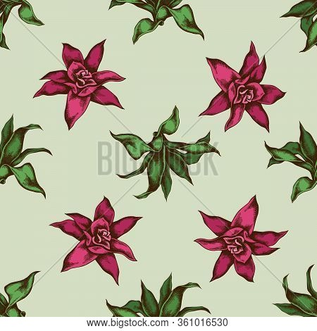 Seamless Pattern With Hand Drawn Colored Guzmania Stock Illustration