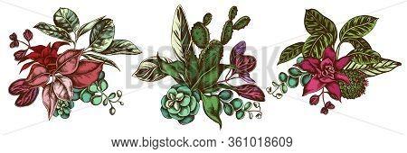Flower Bouquet Of Colored Ficus, Iresine, Kalanchoe, Calathea, Guzmania, Cactus Stock Illustration