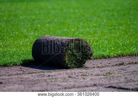 Field With Growing High-quality, Multi-purpose Ryegrass Or Fescue Turf For  Healthy, Green And Hard