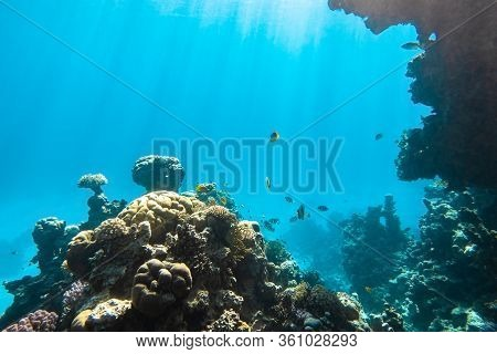 Coral Reef And Tropical Fish In Red Sea, Egypt. Blue Turquoise Clear Ocean Water, Hard Corals And Ro