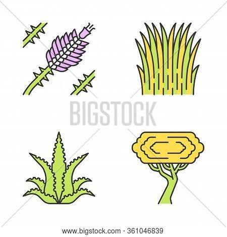 Desert Plants Color Icons Set. Exotic Flora. Ocotillo, Mexican Thread Grass, Aloe Vera, Palo Verde T