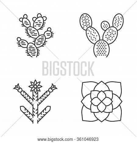 Desert Plants Linear Icons Set. Exotic Flora. Bunny Ear Cactus, Prickly Pear, Cholla, Ghost Plant. A
