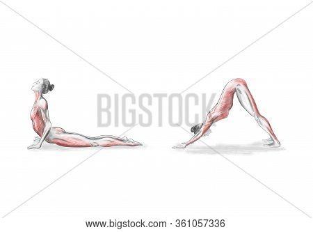 Illustration Of The Yoga Poses (asanas). Woman