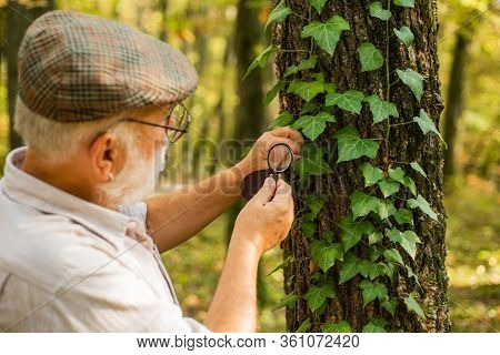 Picky Detective In Forest. Explore Nature. Pensioner With Magnifier Exploring Forest Autumn Day. Bot