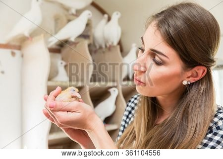 Woman holding a pigeon chick on her hand in a pigeon loft