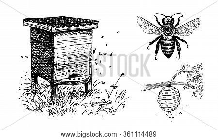 Bee Hives, Apiary, Beehive On A Tree Branch And Bee. Set Of Vector Images.