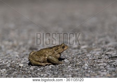 Low-angle Toad