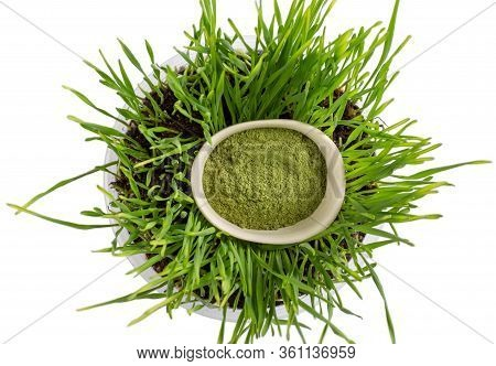 Organic Wheatgrass Powder In White Bowl And Wheat Sprouts Isolated On White Background. Top View, Cl