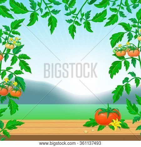 Bright Tomato Ads Banner Template. Background With Fresh Ripe Tomato On Wooden Table, Tomato Branche
