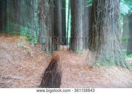Redwood Forest And Abstract Zoom Blur Effects Leading Deep Into Trees.
