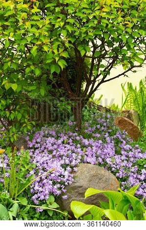 Element Flower Garden Home.lush Landscaped Garden With Flowerbed And Colorful Plants