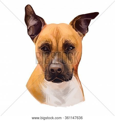 American Staffordshire Terrier Dog Isolated Hand Drawn Digital Art Illustration. Amstaff Medium-size