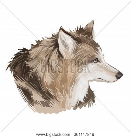 Hare Indian Dog Extinct Domesticated Canine Breed Of Domestic Dog, Coydog, Or Domesticated Coyote. C