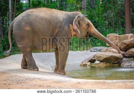 A Close-up Photo Of A Beautiful Elephant