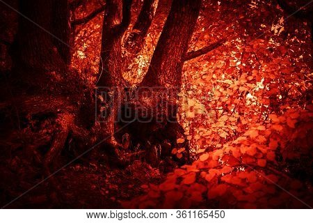 Mystical Horror Scary Abstract Forest To Halloween. Clumsy Dirty With The Texture Of The Roots Of A