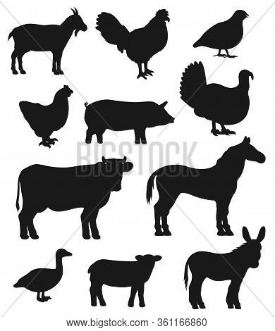 Cattle Farm Animals And Birds, Vector Black Silhouette Icons. Cattle Farm Cow, Isolated Sheep And Qu