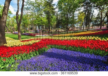 Flower Beds In The Tulip Festival At Emirgan Park, Istanbul, Turkey