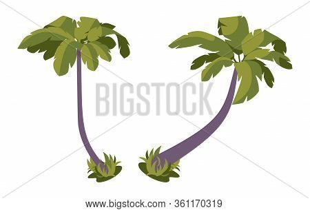Isometric Set Of Palms With Large Green Leaves. Tropical Trees Isolated On White Background