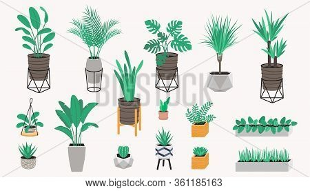 Potted Plants Collection In A Loft Style. Succulents, Cactus And House Plants. Set Of House Indoor P