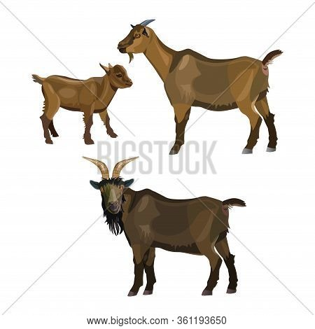 Goat Family. Buck, Nanny And Kid. Vector Illustration