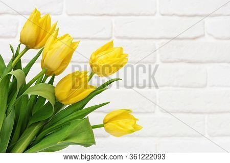 Bouquet Of Tulip Flowers On White Decorative Brick Wall. Natural Flowery Background With Spring Yell